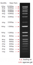 1Kb Plus DNA Ladder, Ready-to-use