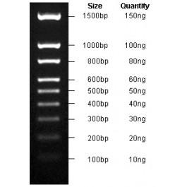 100-1500bp DNA Marker, Original Form